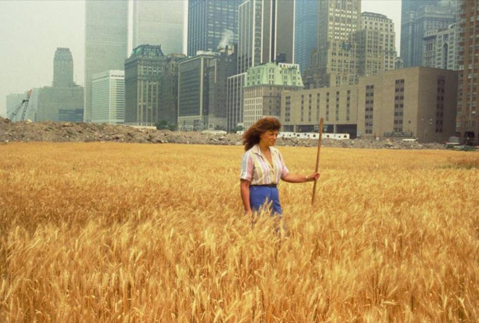 """Agnes Denes, """"Wheatfield - A Confrontation"""" (Nova York, 1982)"""